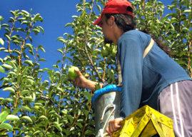 Gutiérrez solicitó la prórroga de la emergencia frutícola